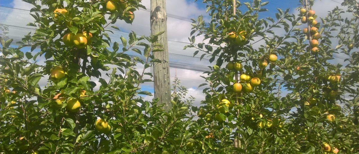 Permalien vers:CAPA Arboriculture / Ruminant